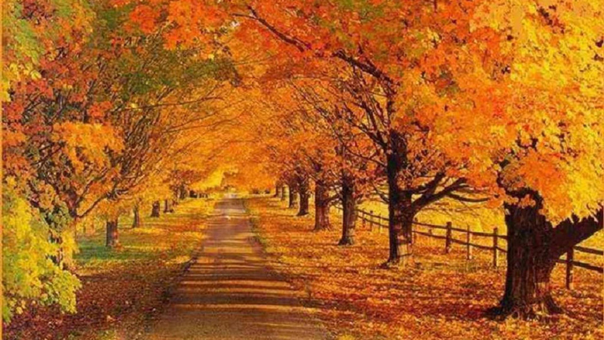 wallpaper other landscape autumn road